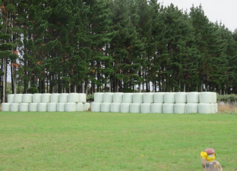 Cipreses que protegen a la flor del kiwi del aire (y lo blanco no son malvaviscos gigantes)..es paja
