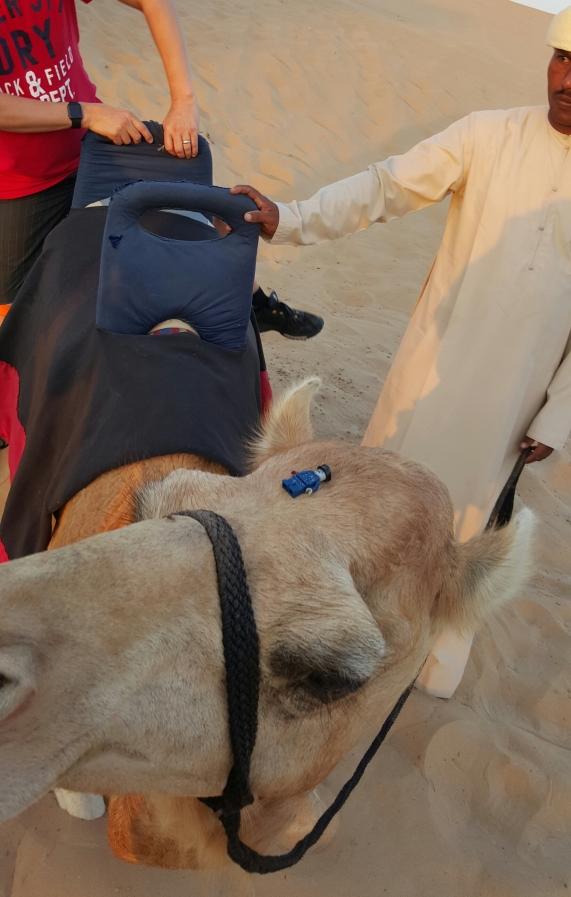 Relajación después de mareo en las dunas