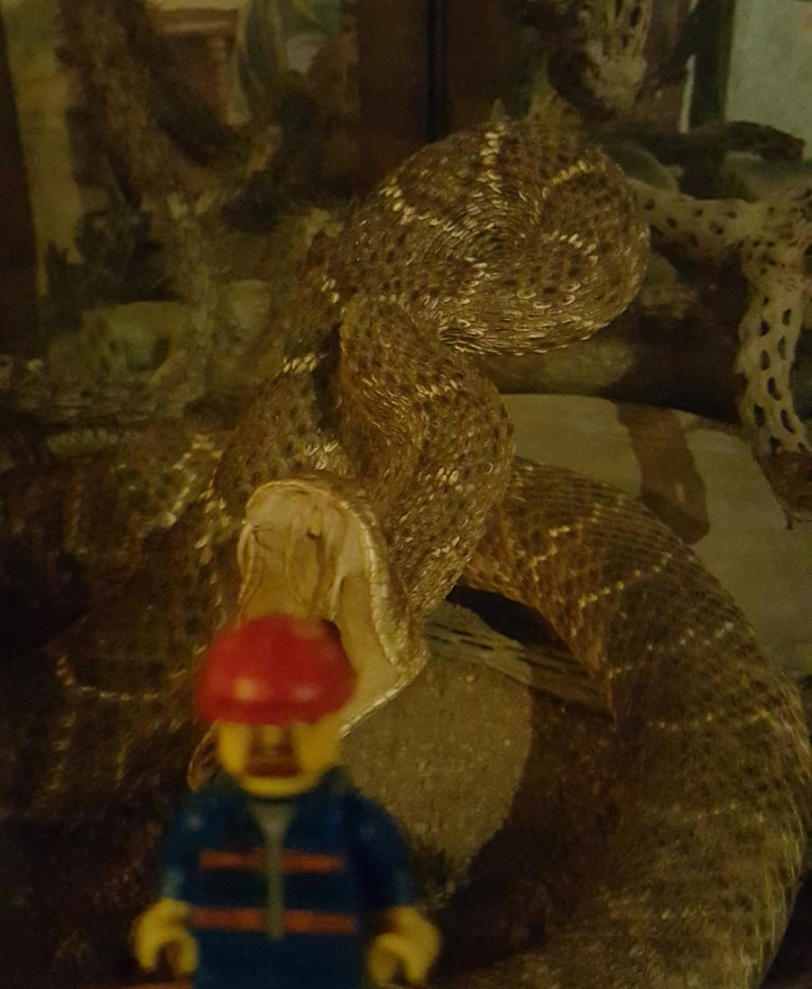 Esta es sólamente una serpiente disecada...no se asusten :)